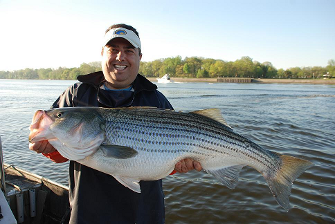 Delaware River Stripped Bass